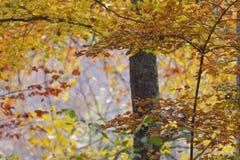 Folhagem de outono colorida Fotografia de Stock Royalty Free