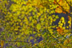 Folhagem de outono colorida Imagens de Stock