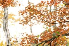 Folhagem de outono colorida Fotos de Stock Royalty Free