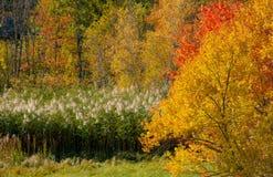 Folhagem de outono em Bedford, New Hampshire, EUA Foto de Stock