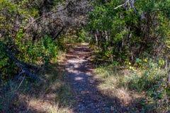 Folhagem de outono em parque estadual perdido dos bordos em Texas imagem de stock