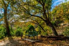 Folhagem de outono em parque estadual perdido dos bordos em Texas fotografia de stock