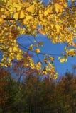folhagem de outono em Quincy Bog, New Hampshire fotografia de stock