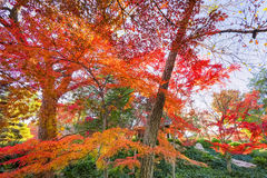 Folhagem de outono em Texas Fotos de Stock