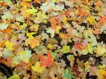 Folhagem de outono em Utá Fotografia de Stock Royalty Free