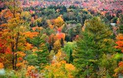 Folhagem de outono em Vermont Foto de Stock Royalty Free
