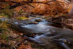 Folhagem de outono impetuosa bonita nas quedas de Guadalupe River, Texas foto de stock royalty free