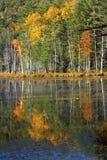 Folhagem de outono refletida na água em Quincy Bog imagem de stock