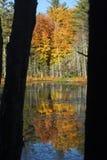 Folhagem de outono refletida na água em Quincy Bog imagens de stock
