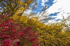 A folhagem de outono vermelha e amarela ramifica agains um céu azul foto de stock