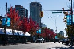 A folhagem de outono, vermelho colorido sae no outono, Canadá Vancôver, BC foto de stock