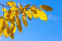 Folhagem de outono vibrante Imagens de Stock Royalty Free