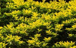 Folhas à luz solar 2 Imagens de Stock