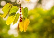 Folhas à luz solar Fotos de Stock Royalty Free