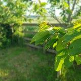 Folhas/árvore fotografia de stock