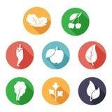 Folhas, ícones das frutas e legumes Estilo liso Fotografia de Stock