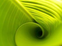 Folhas 02 da banana Imagens de Stock Royalty Free