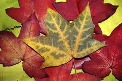 Folhas imagem de stock