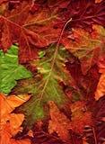 Folhas Fotografia de Stock