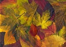 Folhas Foto de Stock Royalty Free