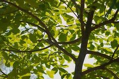 Folhas Fotos de Stock
