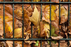 Folhas foto de stock