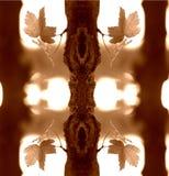 Folhas abstratas Imagens de Stock Royalty Free