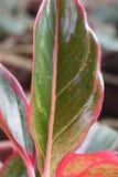 Folhas agradáveis Fotos de Stock