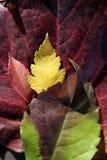 Folhas ainda das folhas de outono fotografia de stock
