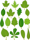 Folhas ajustadas - folhas do verde Fotografia de Stock Royalty Free