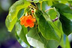 Folhas alaranjadas da flor e do verde Fotos de Stock