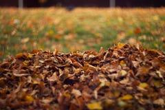 Folhas alaranjadas na grama molhada fotos de stock