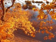 Folhas alaranjadas na perspectiva da água do lago da floresta Verão indiano Autumn Landscape Caminhadas na floresta imagem de stock