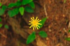Folhas amarelas da flor e do verde foto de stock