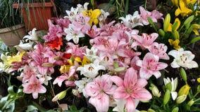 Folhas amarelas da folha do jardim da flor Imagens de Stock Royalty Free