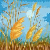 Folhas amarelas do junco Imagem de Stock Royalty Free
