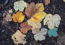 Folhas amarelas e marrons do outono Foto de Stock Royalty Free