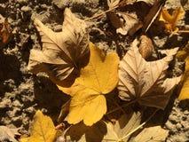 Folhas amarelas e marrons do outono na areia fotos de stock