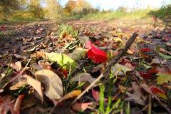 Folhas amarelas e verdes vermelhas foto de stock royalty free