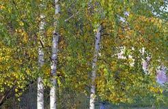 Folhas amarelas em árvores em um parque da cidade fotos de stock royalty free