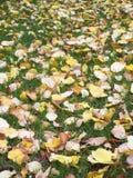 Folhas amarelas na grama verde Foto de Stock Royalty Free