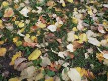 Folhas amarelas na grama verde Imagens de Stock Royalty Free