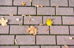 Folhas amarelas na textura dos tijolos fotos de stock