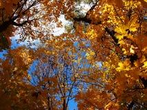 Folhas amarelas no outono no tempo ensolarado Detalhes e close-up imagens de stock