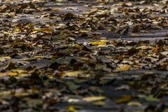 Folhas amarelas secas no assoalho fotos de stock