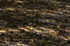 Folhas amarelas secas no assoalho imagens de stock royalty free
