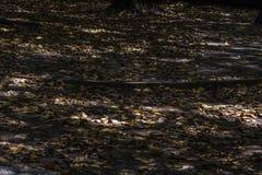 Folhas amarelas secas no assoalho imagens de stock