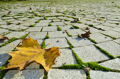 Folhas amarelas, vermelhas, douradas e marrons na terra Imagem de Stock