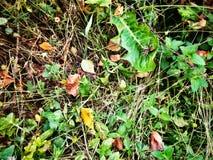 Folhas, aranha, grama, outono Foto de Stock