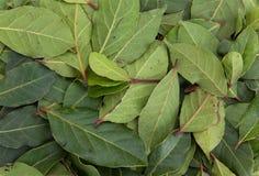 Folhas aromáticas do louro Fotografia de Stock Royalty Free